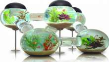 أحواض سمك مبتكرة
