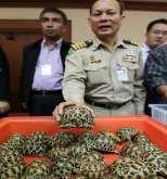 ضبط تهريب 451 سلحفاة و7 تماسيح في تايلند