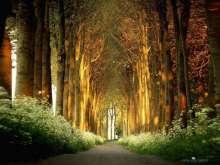 أنفاق من الأشجار