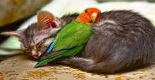 النوم يجمع الأعداء من عالم الحيوان!