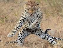 حيوانات راقصة