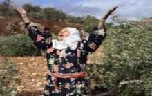 مستوطنون يدمرون أشجارًا غرب بيت لحم