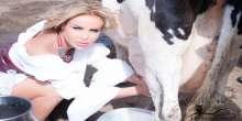 بالصور : رولا سعد تتعلم كيفية حلب البقرة