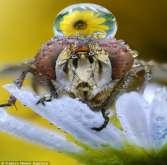 بالصور: مصور يرصد أعين الحشرات عن قرب