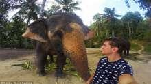 """بالصور: فيل يلتقط """"سيلفي"""" مع سائح بواسطة خرطومه"""