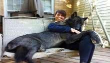 كلاب ضخمة