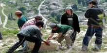 نابلس: مستوطنون يدمرون كرافانا بناه نشطاء فلسطينيون ويبنون آخر مكانه