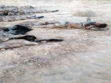 الجيش ينشر صور لجثث الإرهابيين في سيناء .. والمتحدث العسكري : الاعلام المصري وقع في الفخ