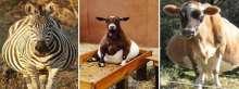 صور طريفة لحيوانات في شهور الحمل الأخيرة!