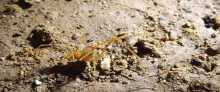 علماء البيولوجيا يعثرون على عنكبوت غريب الأطوار في كهوف البرازيل
