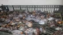 وزارة الاقتصاد في القدس تتلف مواد فاسدة في العيزرية