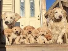عائلة مكتملة