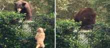 بالفيديو.. كلب يصيب دبا بالرعب