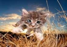 برفقة القطط