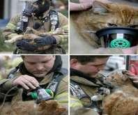 الدفاع المدني وإنقاذ الحيوانات