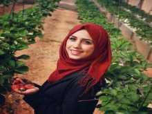 بالصور: سناء تتحدى المجتمع وتعمل بزراعة الفراولة بجنين