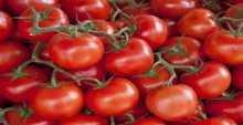 شاهد 7 من أهم فوائد الطماطم
