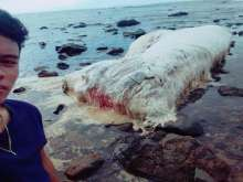 What is that massive blob that's washed up in the Philippines?