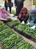 جمعية طوباس الخيرية والاتحاد العام للمرأة الفلسطينية تنظمان يوم عمل