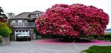 أجمل 16 شجرة حول العالم