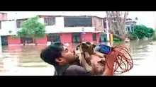 مراسل تلفزيوني يوقف بث تقرير على الهواء لإنقاذ كلب