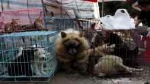 Taiwan becomes first Asian state to ban dog and cat meat being sold or consumed