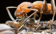 أسلوب الإنقاذ وإعادة التأهيل .. معارك النمل تشغل العلماء وتصدمهم!