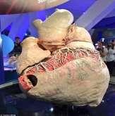 مُذهل.. الكشف عن أول قلب حوت محفوظ في العالم