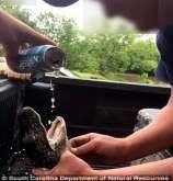 مشاهد مروعة لشابين يجبرا تمساحا صغيرا على شرب البيرة
