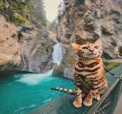 """تعرف على القطة """"سوكي"""" التي تعيش حياة أفضل منك!"""