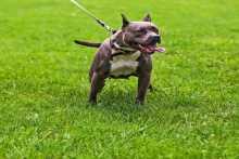 8 معلومات عن الكلب المحظور في العالم ..ويتم تهريبه لمصر!