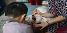 مشاهد غير إنسانية لطبيب يقطع الأحبال الصوتية للكلاب لمنع نباحها
