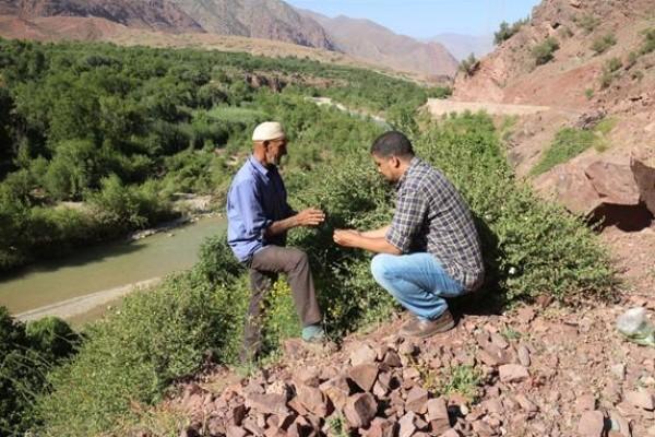 الحفاظ على التنوع التقليدي للمحاصيل والنباتات الطبية البرية في المغرب بقلم:د. عبد الرحيم ورغيدي