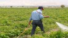 المزراع - امجد الديك