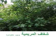 شغاف المريمية.. مقاطع شعرية بقلم:ايفان علي عثمان